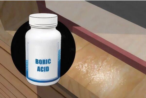 ▷ Acido borico para los pececillos de plata ▷【 EliminarBichos.es 🥇】