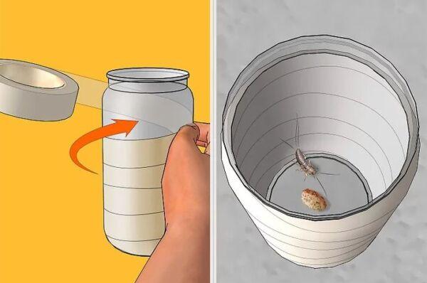▷ Cómo atrapar a los pececillos de plata ▷【 EliminarBichos.es 🥇】