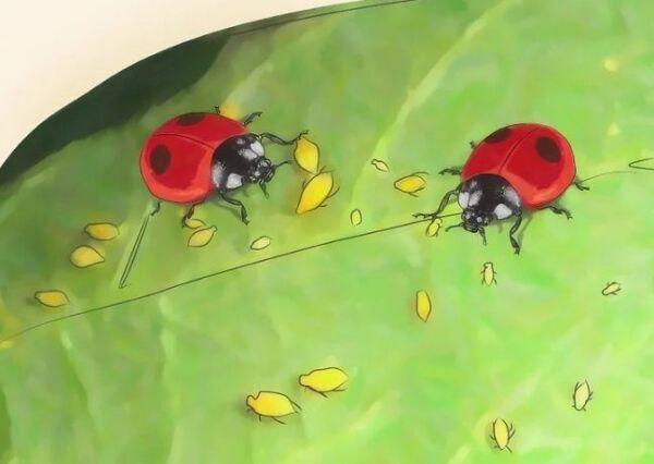 ▷ Depredadores contra pulgones ▷【 EliminarBichos.es 🥇】