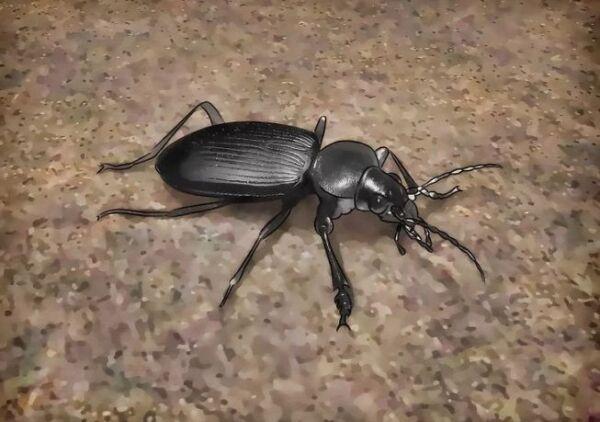 ▷ Depredadores para eliminar babosas ▷【 EliminarBichos.es 🥇】.jpg