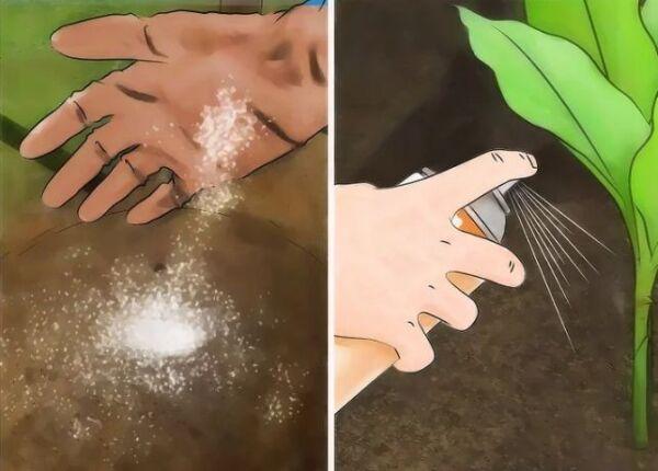 ▷ Eliminar plagas de hormigas contra pulgones ▷【 EliminarBichos.es 🥇】.jpg