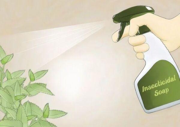 ▷ Jabon insecticida contra pulgones ▷【 EliminarBichos.es 🥇】.jpg