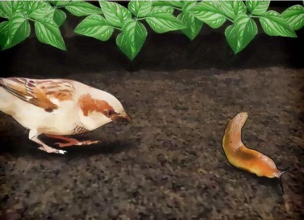▷ Pajaros y aves para eliminar babosas ▷【 EliminarBichos.es 🥇】.jpg