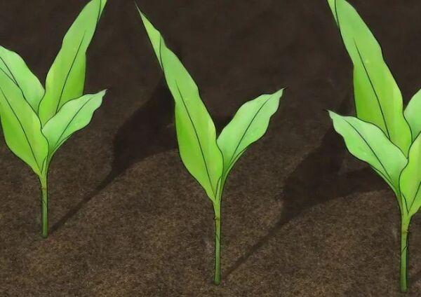 ▷ Plantas aromaticas contra pulgones ▷【 EliminarBichos.es 🥇】.jpg