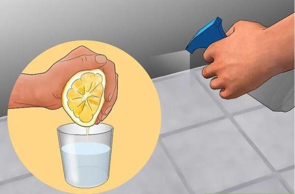 ▷ Spray liquido para los pececillos de plata ▷【 EliminarBichos.es 🥇】.jpg