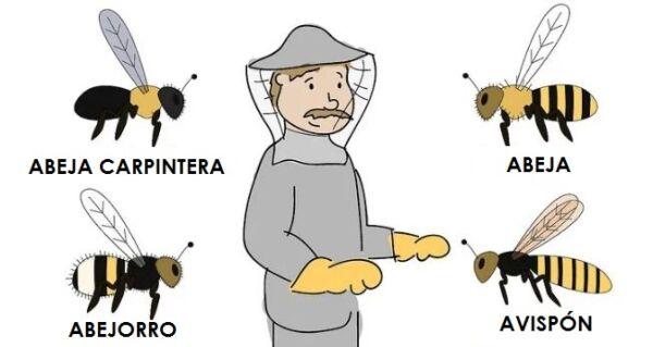 ▷ Tipos de abejas ▷【 EliminarBichos.es 🥇】