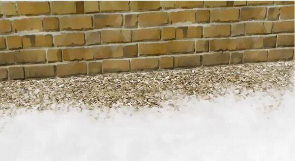 ▷ Virutas de cedro para los pececillos de plata ▷【 EliminarBichos.es 🥇】
