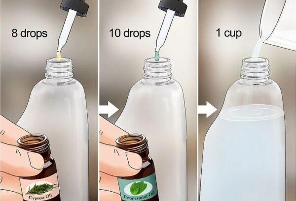 ▷ Aceites esenciales como repelentes de cucarachas▷【 EliminarBichos.es 🥇】