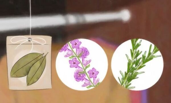 ▷ Bolas de naftalina para polillas de armario ▷【 EliminarBichos.es 🥇】.jpg