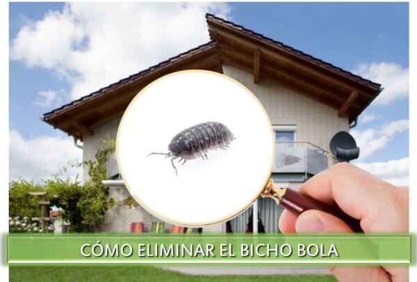 ▷ Cómo ahuyentar las Bicho bola ▷【 EliminarBichos.es 🥇】