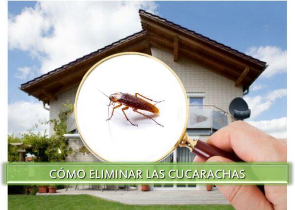 ▷ Cómo eliminar las Cucarachas de casa ▷【 EliminarBichos