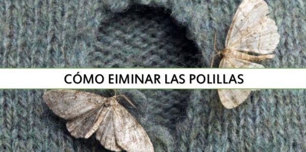 ▷ Cómo eliminar las Polillas de la ropa ▷【 EliminarBichos.es 🥇】.jpg