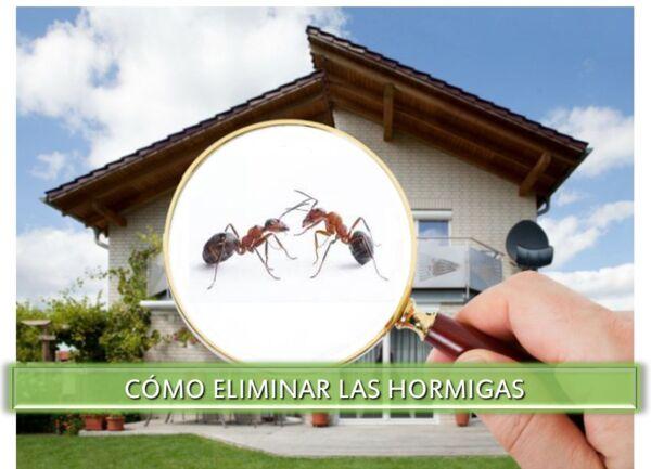 ▷-Cómo-eliminar-las-hormigas▷【-EliminarBichos.es-🥇】