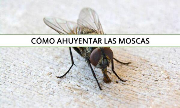 ▷ Cómo eliminar las moscas de casa ▷【 EliminarBichos.es 🥇】.jpg