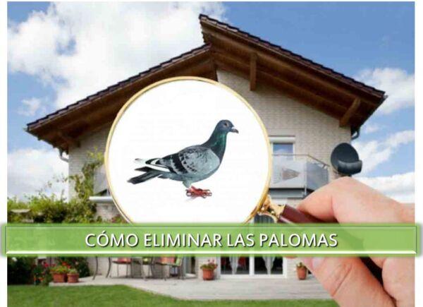▷-Cómo-eliminar-las-palomas-▷【-EliminarBichos.es-🥇】.jpg