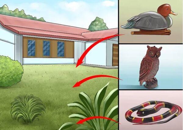 ▷ Depredadores como repelentes de palomas ▷【 EliminarBichos.es 🥇】.jpg