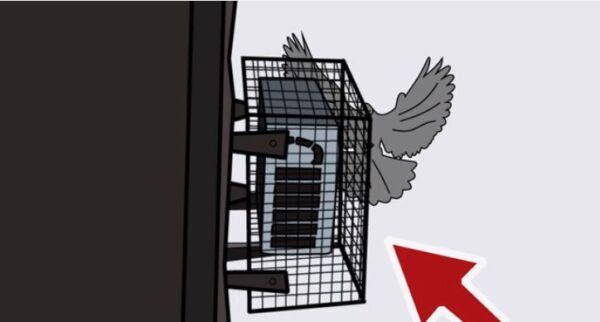 ▷ Mallas de metal como repelentes de palomas ▷【 EliminarBichos.es 🥇】.jpg