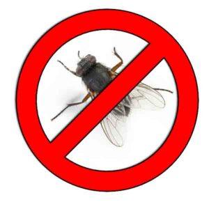 Como-ahuyentar-moscas.jpg