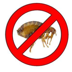 Como-ahuyentar-pulgas.jpg