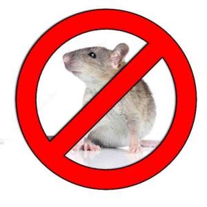 Como-eliminar-ratas-▷【-EliminarBichos.es-🥇】.jpg